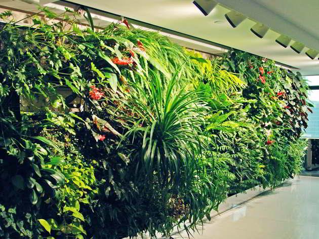 9 Tanaman Hias Untuk Taman Dinding Vertikal Terpopuler Beserta