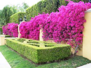 Tanaman Yang Cocok Untuk Vertikal Garden