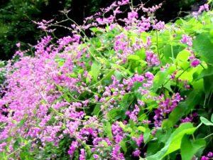 Jenis Tanaman Bunga Untuk Taman Vertikal