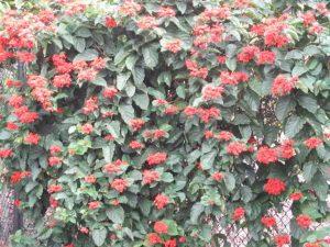 Tanaman Hias yang Cocok Untuk Taman Dinding