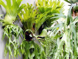 Jenis Tanaman Untuk Kebun Vertikal