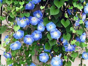 Jenis Tanaman Bunga yang Cocok Untuk Taman Vertikal