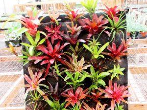 Macam-macam Tanaman Untuk Kebun Vertikal