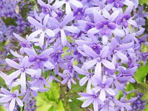 Macam-macam Tanaman Hias Bunga Untuk Taman Vertikal