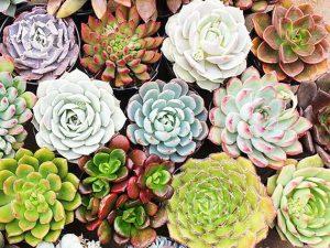 Jenis-jenis Tanaman Untuk Vertikal Garden