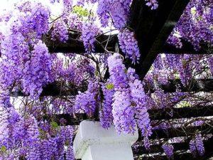 Contoh Tanaman Bunga Untuk Taman Vertikal