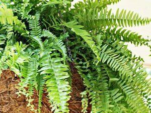 Manfaat dan Fungsi Kebun Vertikal