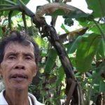 Kisah Sukses Petani PISANG ORGANIK dari Bantul yang Mendunia