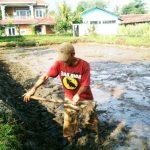 Panduan Persiapan Kolam Tanah Sebelum Tebar Benih