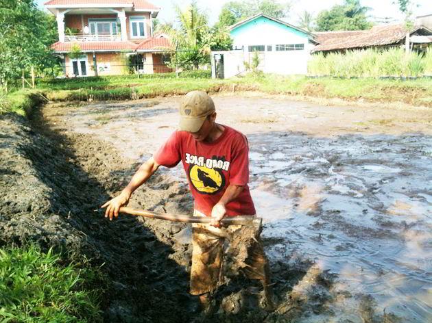 8 Tahap Cara Membuat Kolam Tanah Untuk Lele Nila Ikan Mas Dan Ikan Lainnya