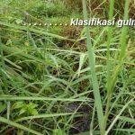 Pengelompokan GULMA, Mengenal Jenis-jenis Gulma dan Nama Latinnya