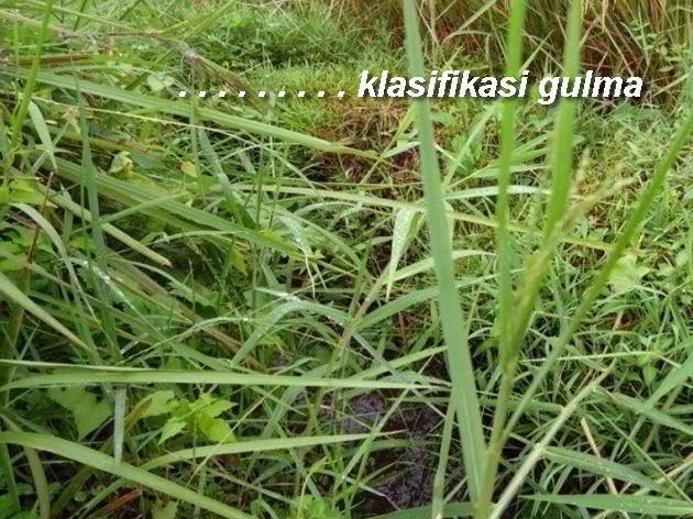 KARAKTERISTIK GULMA PDF DOWNLOAD