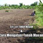 Karakteristik TANAH MASAM dan Cara Menaikkan pH Tanah Masam