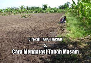 Cara Mudah Menaikkan pH Pada Tanah Masam