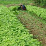 Jenis-jenis Sayuran yang Cocok Dimusim Hujan Serta Tips Pemeliharaannya