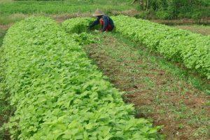 Tips Merawat Sayuran Dimusim Hujan