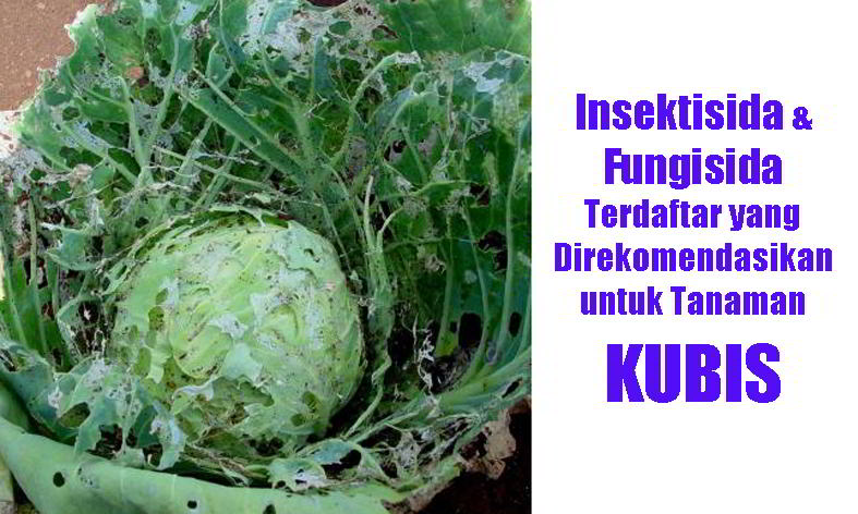99 Insektisida Dan Fungisida Yang Direkomendasikan Untuk Tanaman Kubis