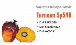 10 Jenis Varietas Unggul Kelapa Sawit di Indonesia