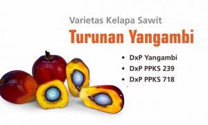 10 Rekomendasi Varietas Unggul Kelapa Sawit di Indonesia