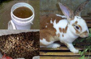 12 Tahap Cara Pengolahan Urin Kotoran Kelinci