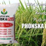 NPK Phonska Plus, Harga Murah Berkualitas dan Mampu Meningkatkan Hasil Panen
