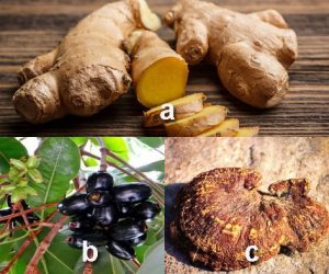Khasiat dan Efek farmakologis jahe, jamblang dan jamur kayu