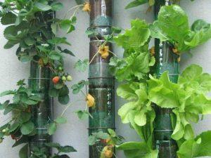 Menanam Strowberi Vertikultur Dinding di Botol Bekas