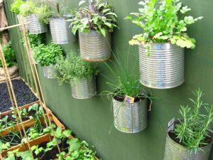 Kebun Vertikultur Sayuran di Kaleng Bekas