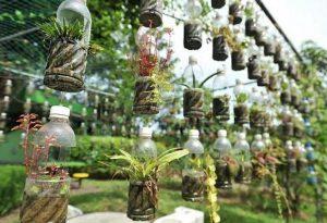 Berkebun Vertikultur Sederhana di Botol Bekas