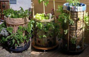 Membuat Vertikal Garden dengan Karung Goni Bekas