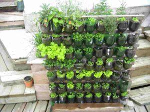 Kebun Sayur Vertikultur di Botol Bekas