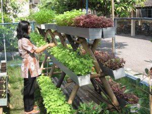 Cara Sederhana Membuat Kebun Sayur Vertikultur di Halaman Rumah