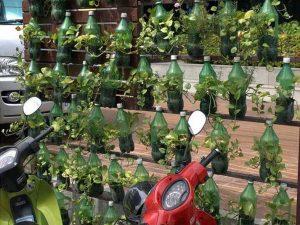 Berkebun Vertikal Sederhana Menggunakan Botol Bekas