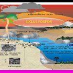 Pengertian SIKLUS FOSFOR (Daur Fosfor Sederhana), Proses dan Skema Daur Fosfor