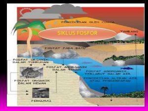 Makalah Siklus Fosfor pdf
