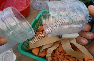 Menanam Cabai Hidroponik di Botol Bekas Aqua