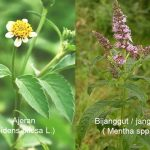 Mengenal 39 Jenis Tanaman yang Berpotensi Sebagai Bahan PESTISIDA ALAMI (Bio Pestisida)