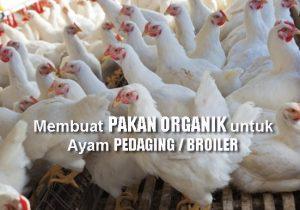 Cara Mudah Membuat Pakan Organik untuk Ayam Broiler