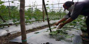 Model Lanjaran Tali dan Benang untuk Oyong