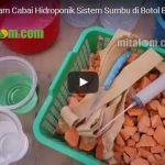 Video Tutorial Cara Menanam CABAI HIDROPONIK Sederhana di Botol Bekas