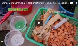 Video Tutorial Lengkap Menanam Cabai Hidroponik Sistem Sumbu