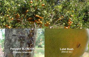 23 Jenis Hama dan Penyakit Tanaman Jeruk