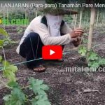 Video Cara Membuat LANJARAN (Para-para) Tanaman Pare Menggunakan Tali dan Benang