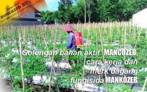 Mengenal Golongan Bahan Aktif MANKOZEB, Cara Kerja dan Manfaat Fungisida Mancozeb