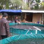 Panduan Praktis Budidaya Ikan LELE di KOLAM TERPAL bagi Pemula, Mudah dan Murah