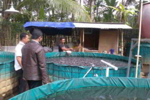 Cara Memelihara Ikan Lele Kolam Terpal yang Menguntungkan