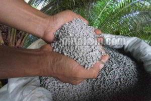 Manfaat Pupuk Phospat (TSP, SP36, SP18) untuk Tanaman Kelapa Sawit