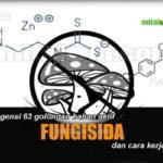 Mengenal 63 Golongan Bahan Aktif FUNGISIDA dan BAKTERISIDA (Lengkap dengan KODE dan CARA KERJA Fungisida)