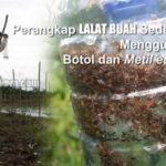 Perangkap Lalat Buah Metil Eugenol pada Tanaman Cabai