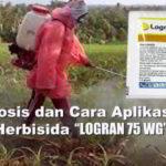 Dosis dan Cara Aplikasi Logran 75 WG